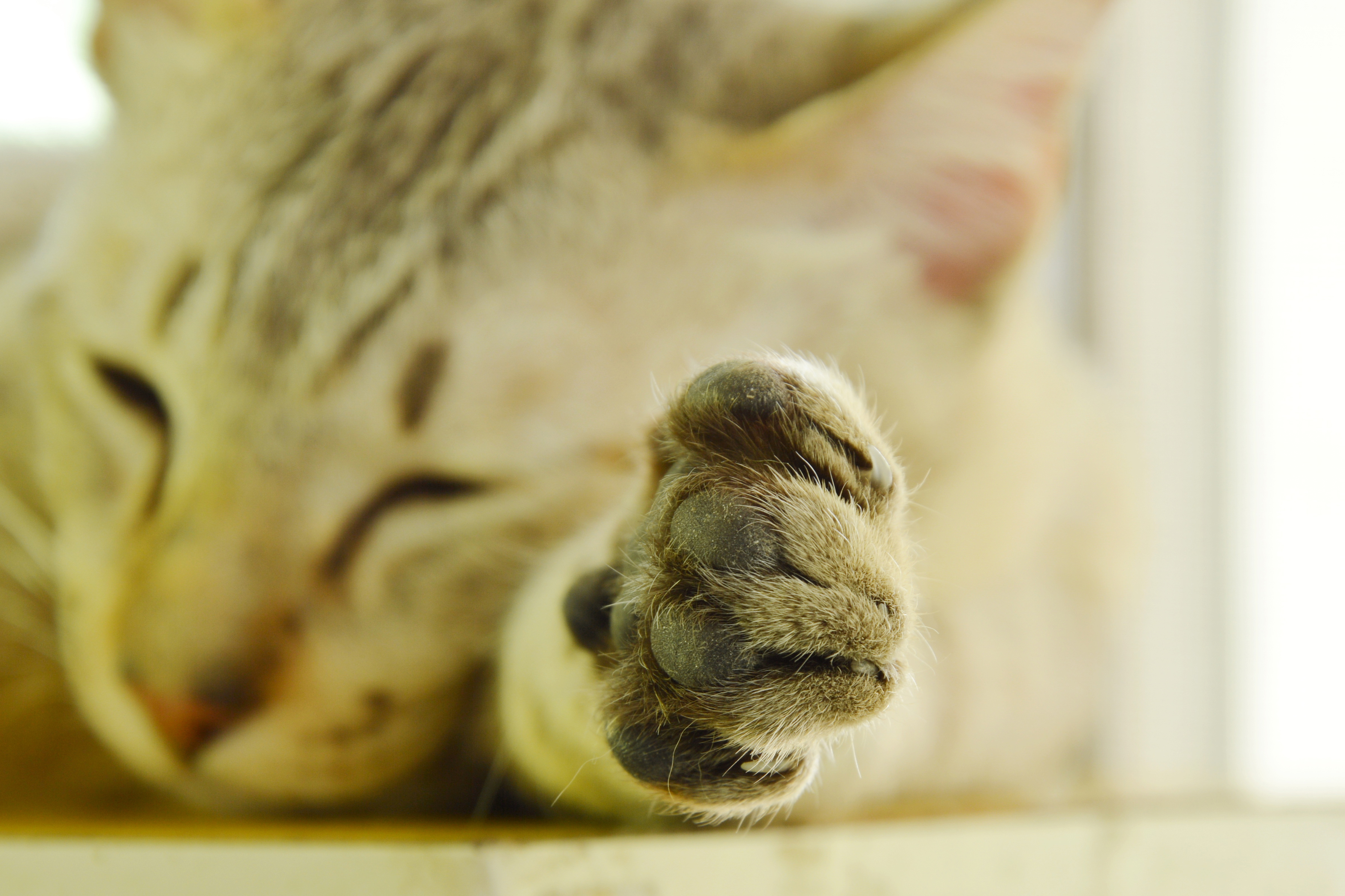 declawing_ethics of