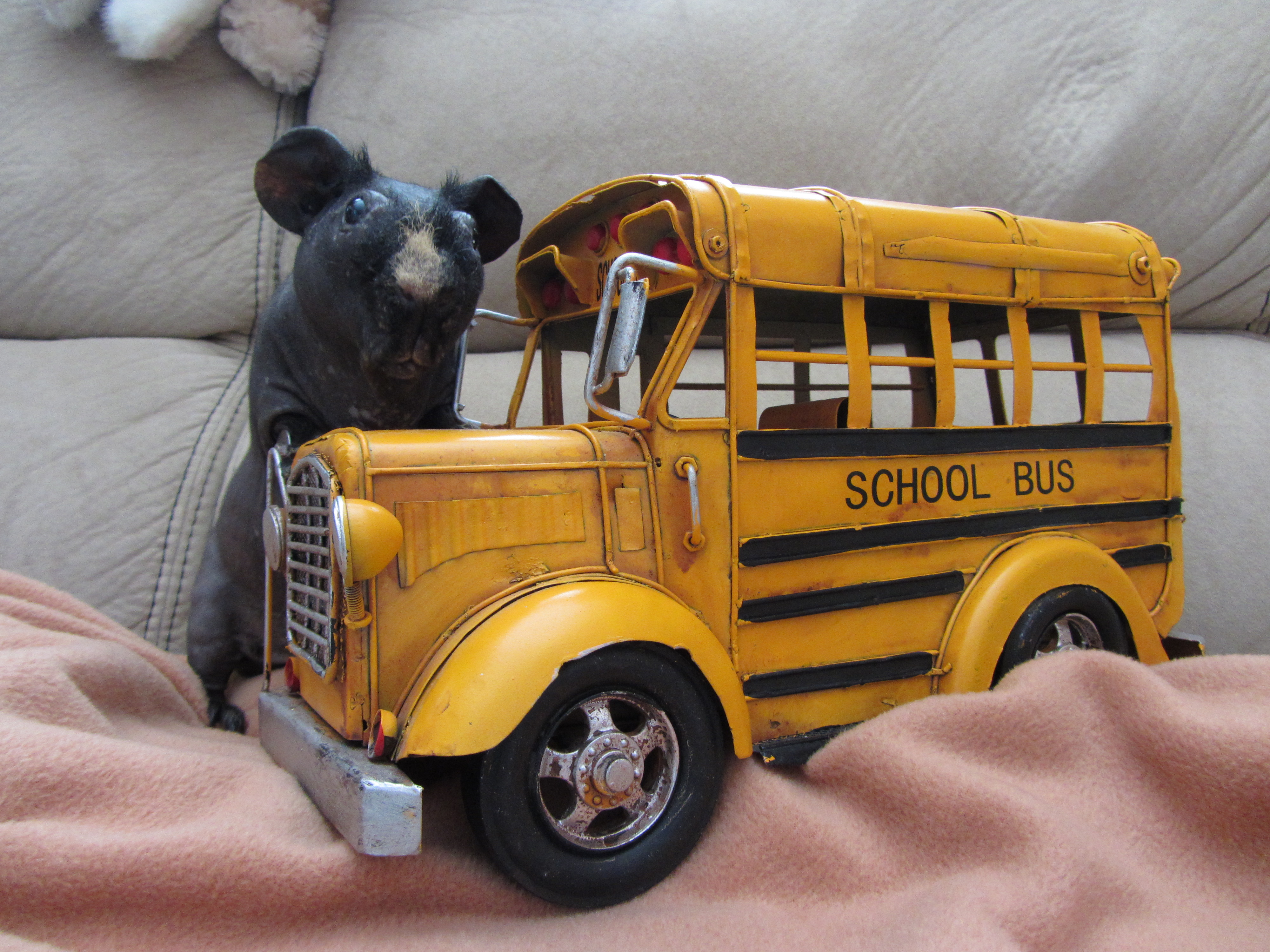 Barnaby and Bus